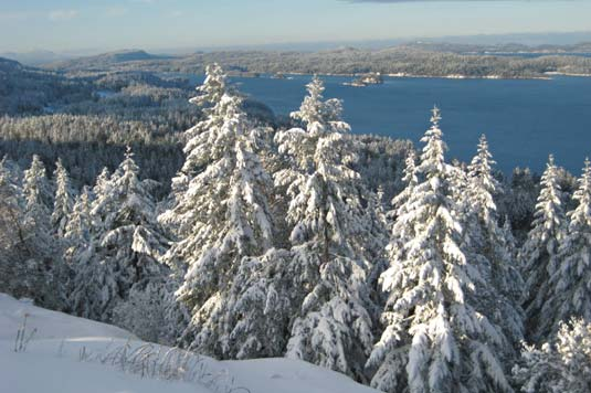 Snow covered fir trees and the  harbour below, Salt Spring Island